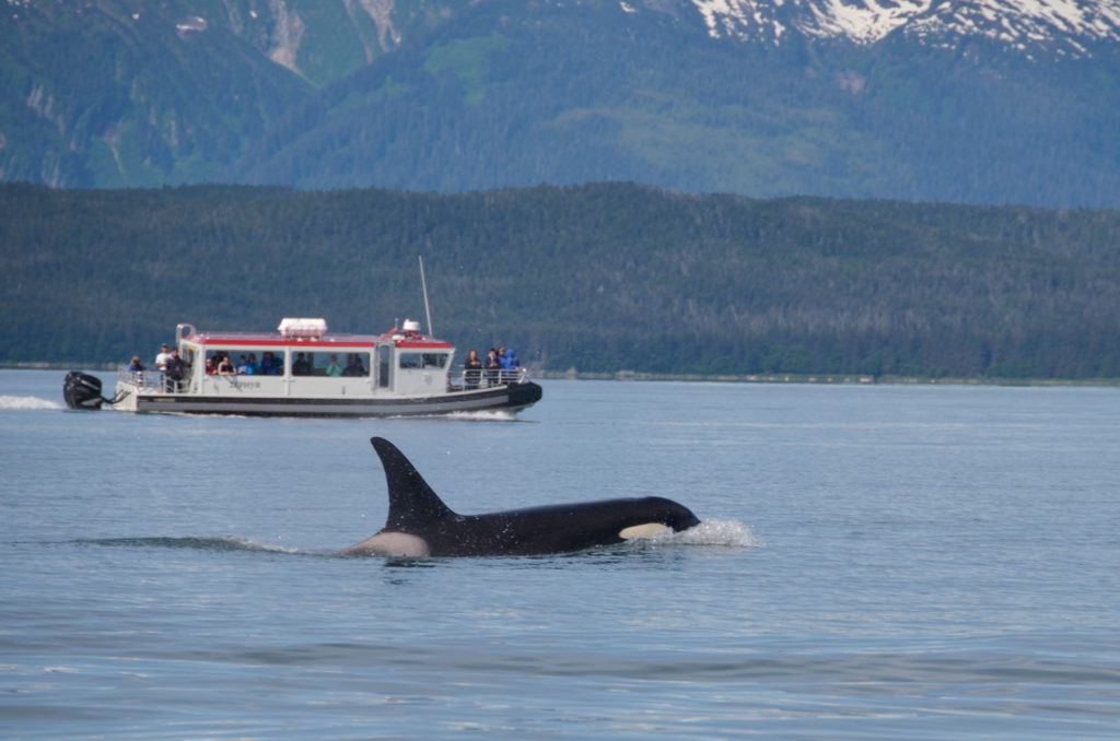 Orca in view