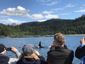 juneau_whalewatching_orca_peoplevisible_sm