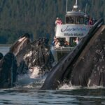 juneautours_whalewatch2